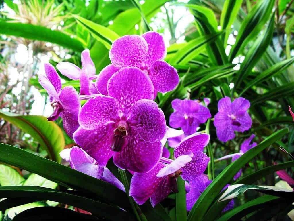 Kết quả hình ảnh cho phong lan