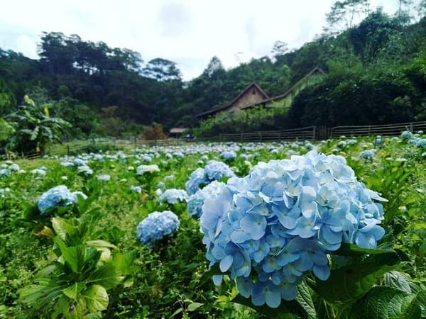 vườn-hoa-đẹp
