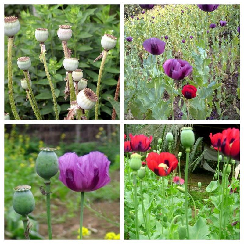 các loài hoa đẹp nhất thế giới
