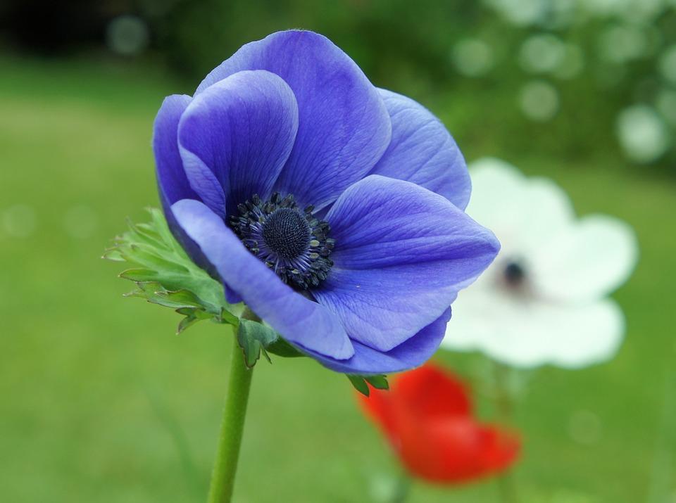 các loài hoa-đẹp-nhất