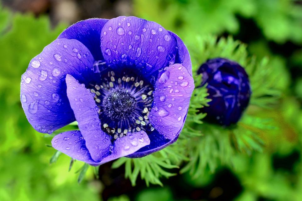 các loài hoa
