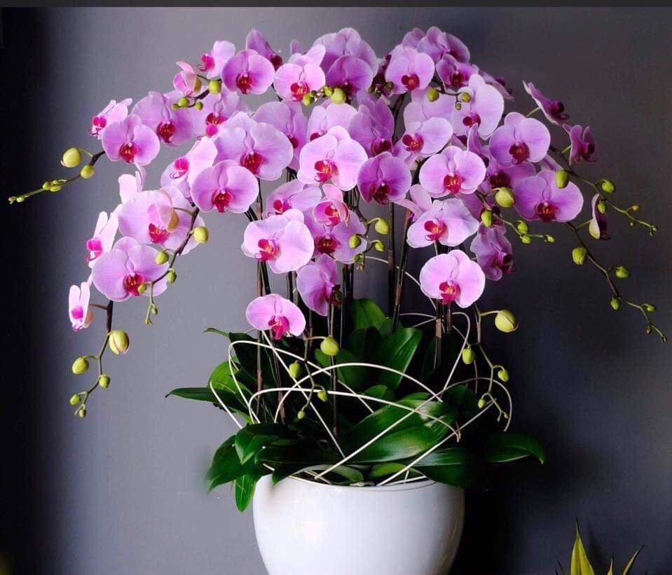 hoa-lan-y-nghia
