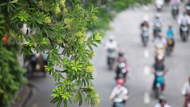 Hoa đẹp ở Hà nội