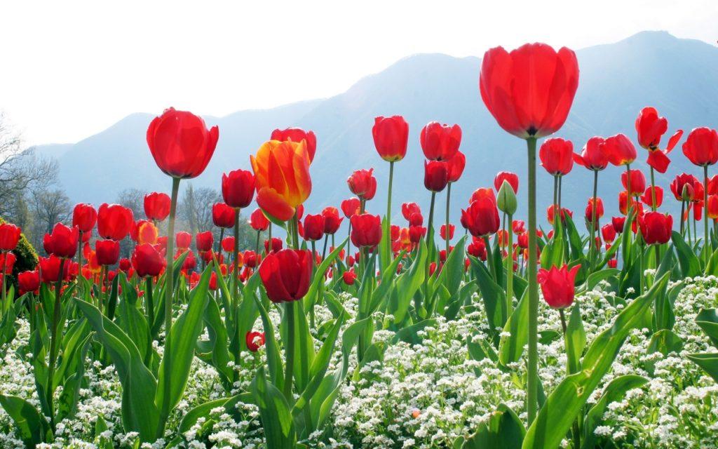 hoa màu đỏ