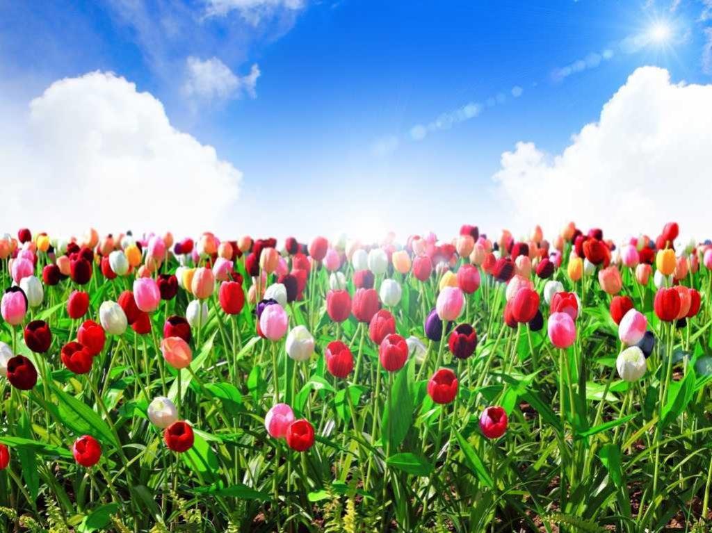 cánh đồng hoa đẹp