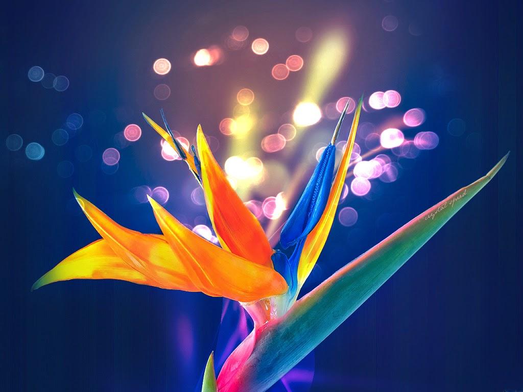 ý nghĩa hoa